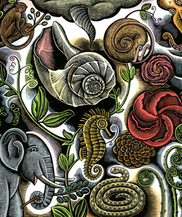 Endpapers for Swirl by Swirl: Spirals in Nature
